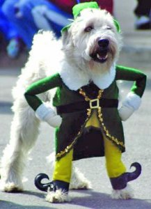 dog_dressed_up_for_christmas-366