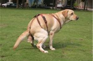 dog-poop-catcher